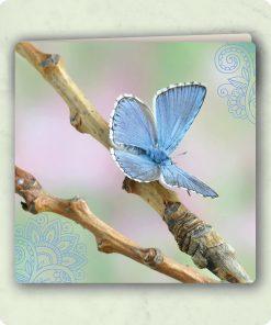 kaart-vlinder-op-tak